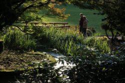 Japonská zahrada u Jestřabí Luhačovice