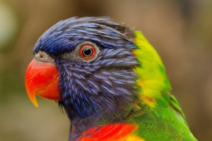 zoo lešná, papoušek, výlet kousek od Luhačovic do zoologické zahrady