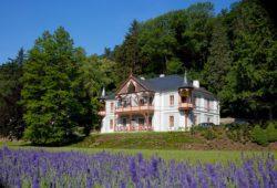 Vila Alpská růže